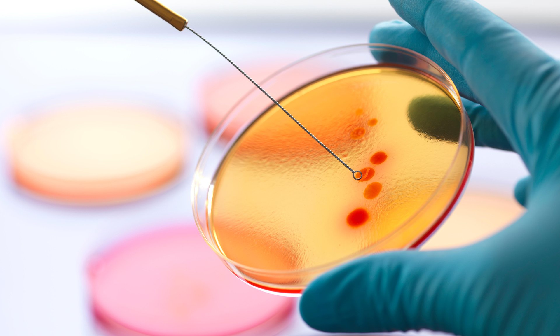 Can open data help curtail the spread of antibiotic resistant bacteria? Photograph: Alamy